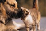 Polizza per animali domestici, la scelta giusta per Natale