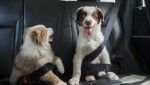 Vacanze: proteggere gli animali domestici con una polizza