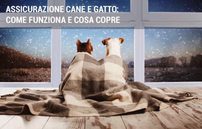 Assicurazione cane e gatto: come funziona e cosa copre