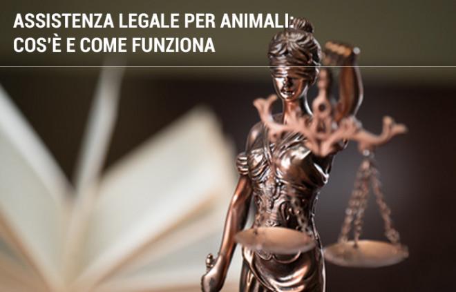 AIDAA: assistenza legale per animali domestici