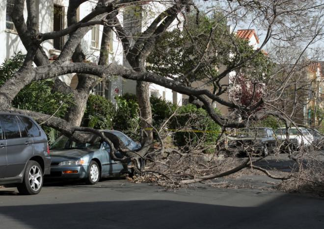 Chi risarcisce i danni all'auto per la caduta di un albero