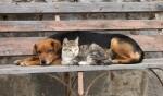 Migliori assicurazioni animali domestici Maggio 2021