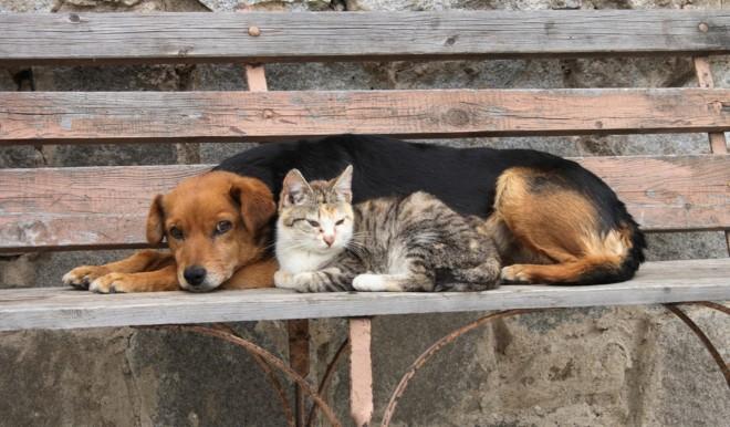 Le migliori assicurazioni cane e gatto di Maggio 2021
