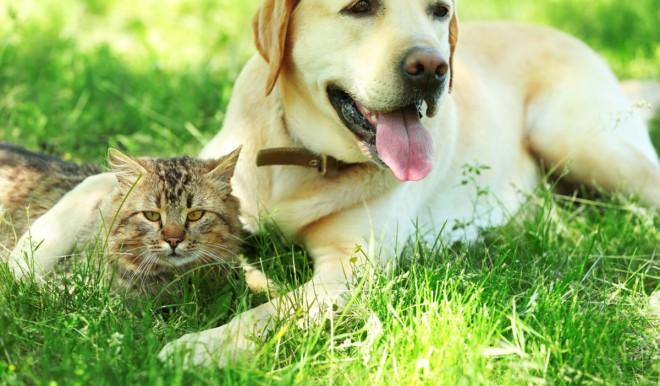 Le migliori assicurazioni animali domestici Autunno 2021