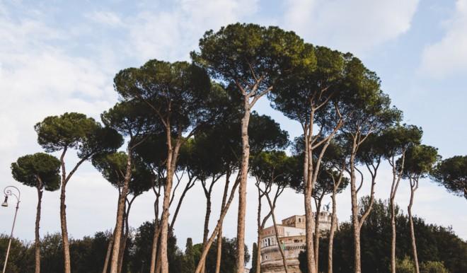 Qualità dell'aria nelle città usando le piante: il progetto dell'Enea