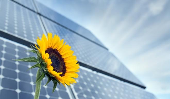 Energia solare dai campi agricoli: ENEA lancia la prima rete nazionale per l'agrivoltaico sostenibile