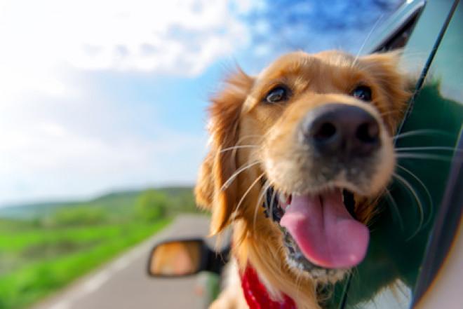 Assicurazioni da viaggio…per animali