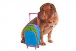 Viaggiare con un animale: l'assicurazione non basta