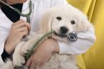 Cresce il mercato assicurativo per gli animali domestici