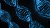 Polizze salute e vita: stop ai test genetici